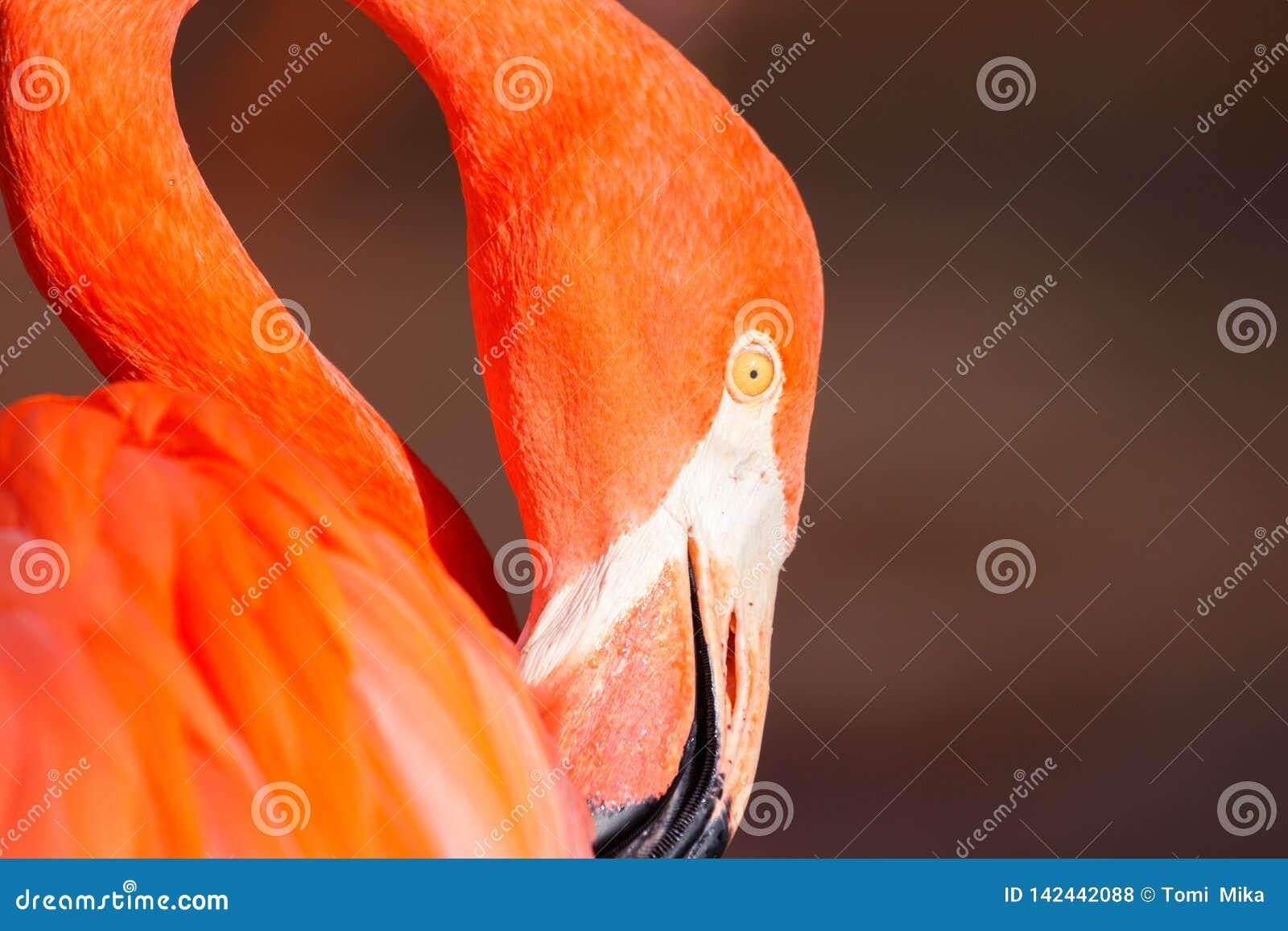 Beautiful nice colored detail flamingo