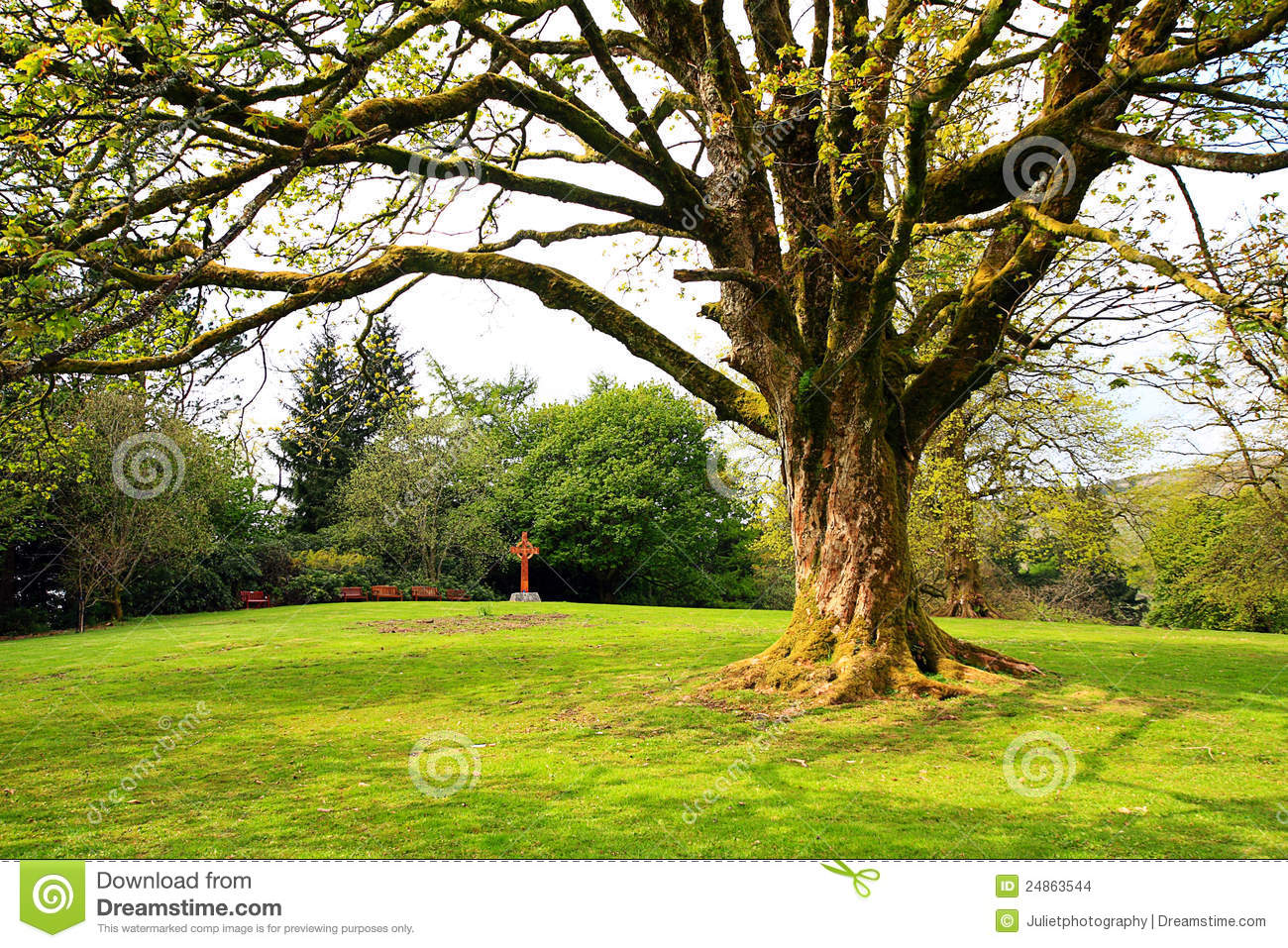Beautiful old tree in spring stock images image 24863544 for Garden trees photos