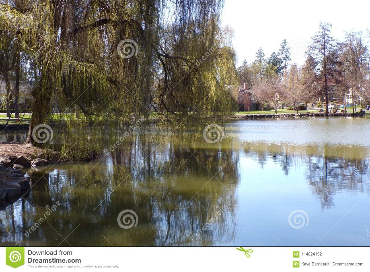 Beautiful Old Weeping Willow Stands Sentry At the Edge of Pond