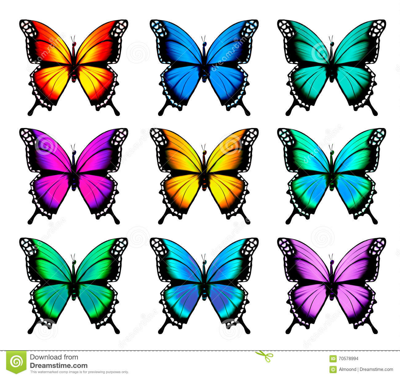 beautiful orange butterfly in different positions  stock