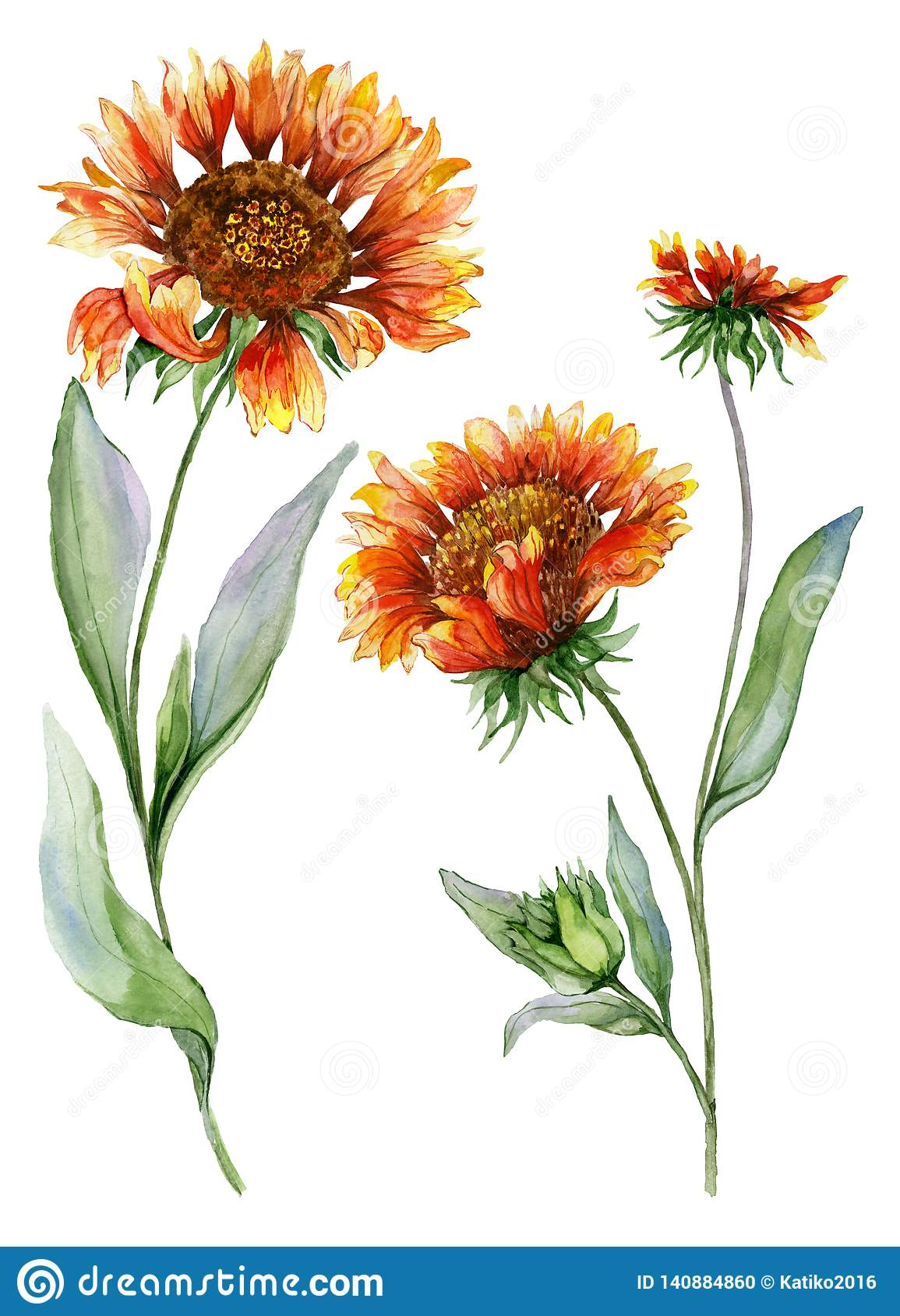 Beautiful Orange Coreopsis Flower On A Stem With Green Leaves Set Of Two Flowers Isolated On White Background Watercolor Stock Illustration Illustration Of Orange Flora 140884860