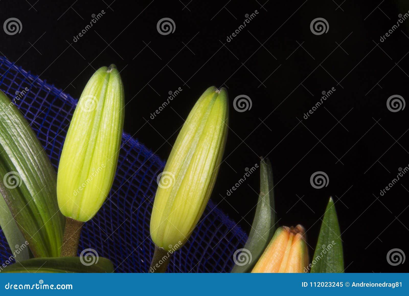 Beautiful orange lily flower on black background stock image image beautiful orange lily flower on black background izmirmasajfo