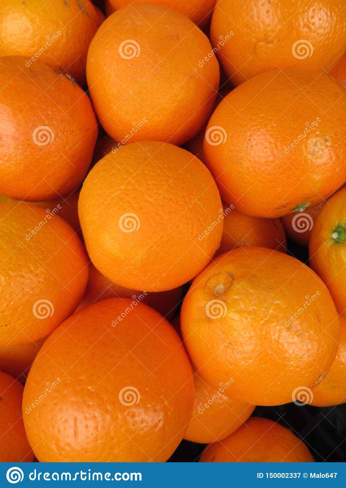 Beautiful oranges from an incredible color and a delicious flavor