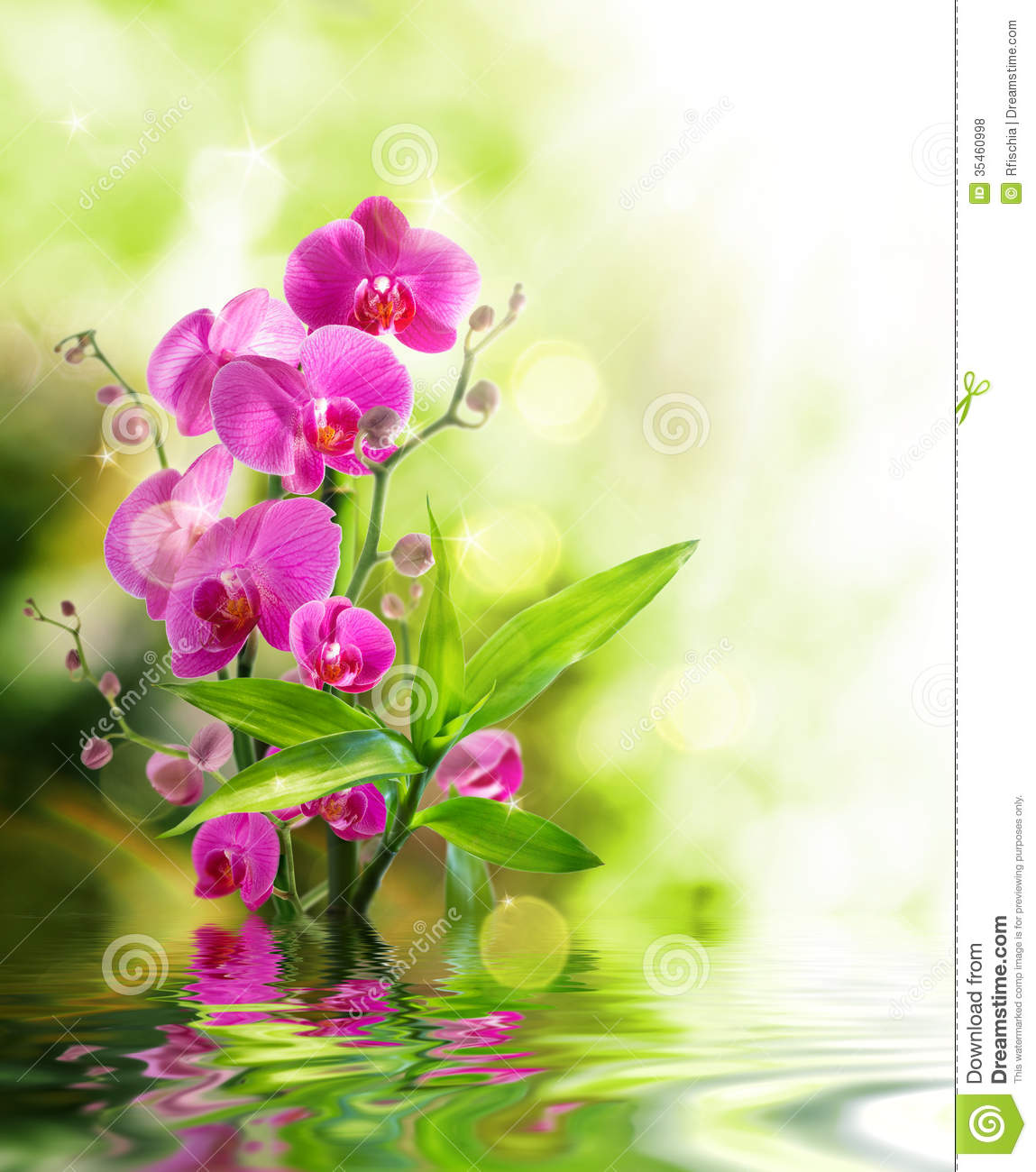 Beautiful orchid and bamboo for border treatment spa on water