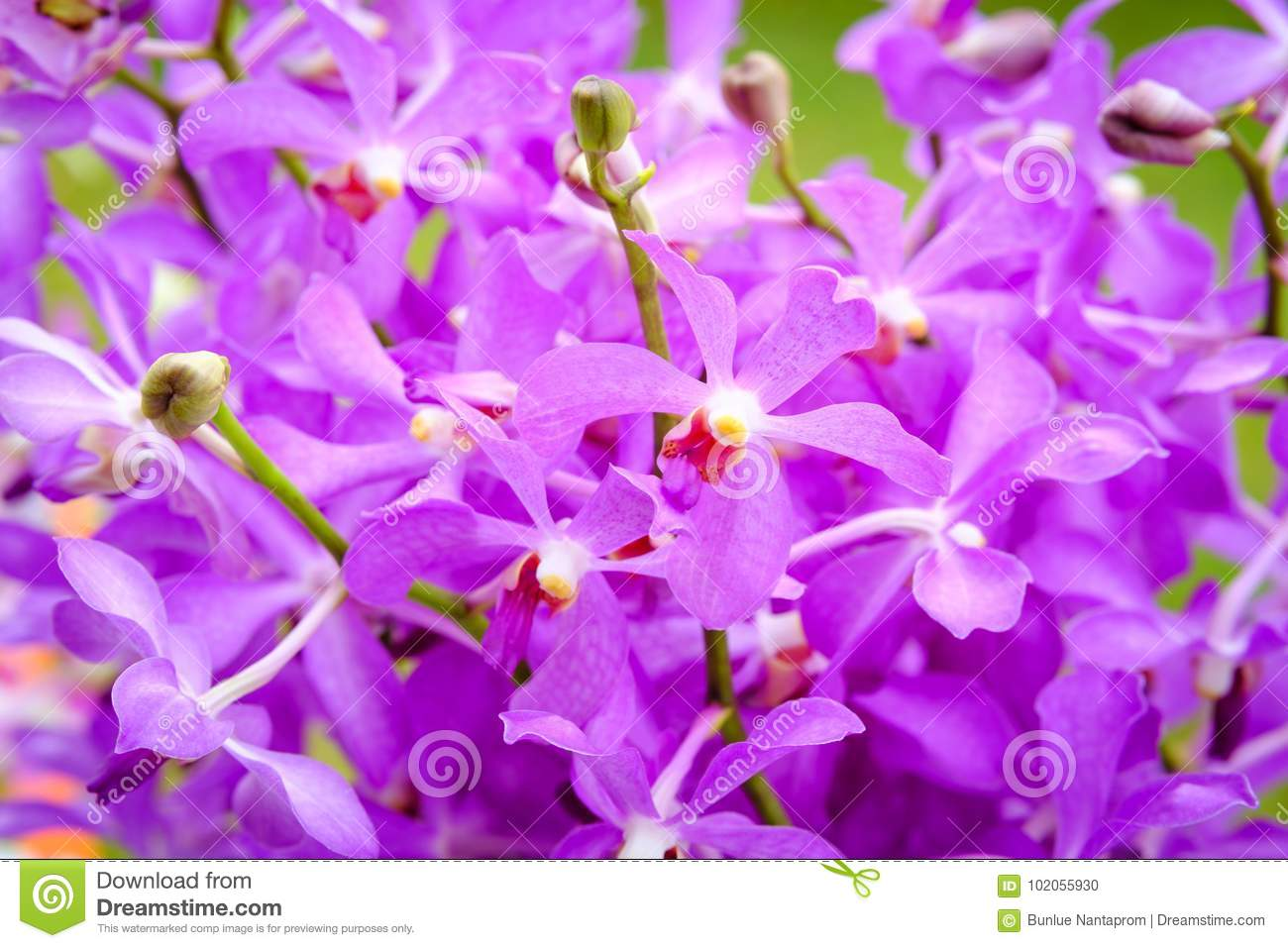 Beautiful Orchid Flower And Green Leaves Background In The Garde