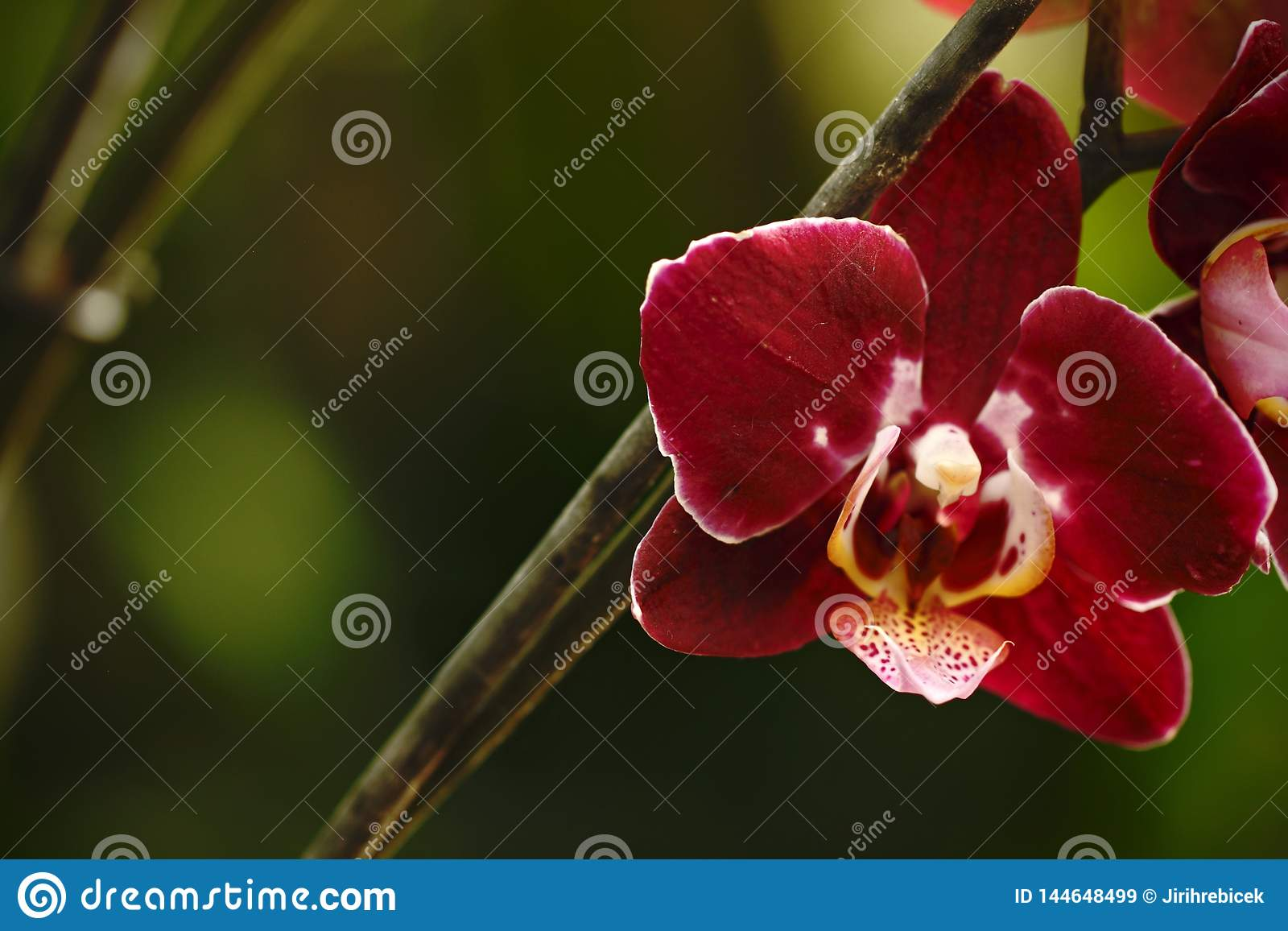 Beautiful orchid flower grow in tropical garden with natural background, wallpaper natural closeup macro, postcard beauty and