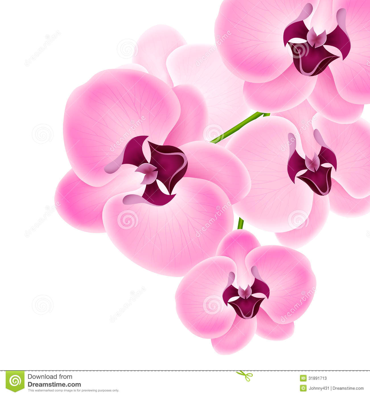 Beautiful Orchid Stock Photos