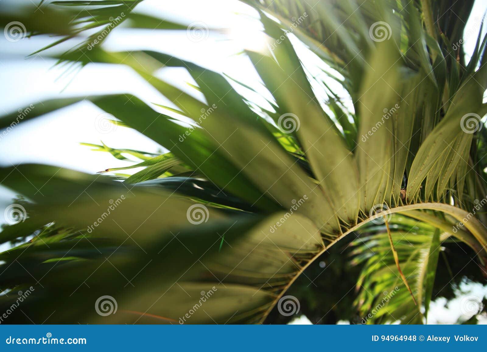 Beautiful palm branch