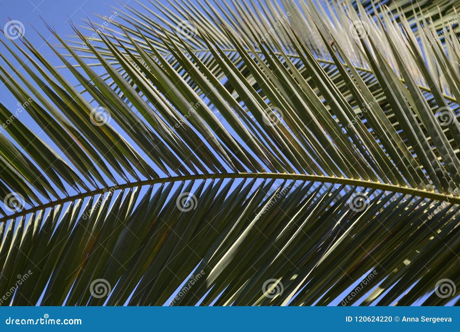 The beautiful palm leaf