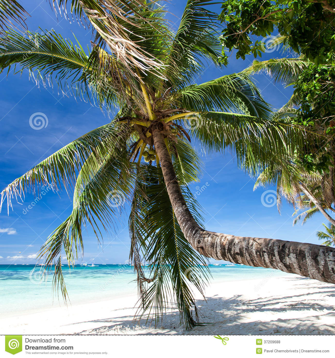 Boracay Beach: Beautiful Palm On White Beach, Boracay Island Royalty Free