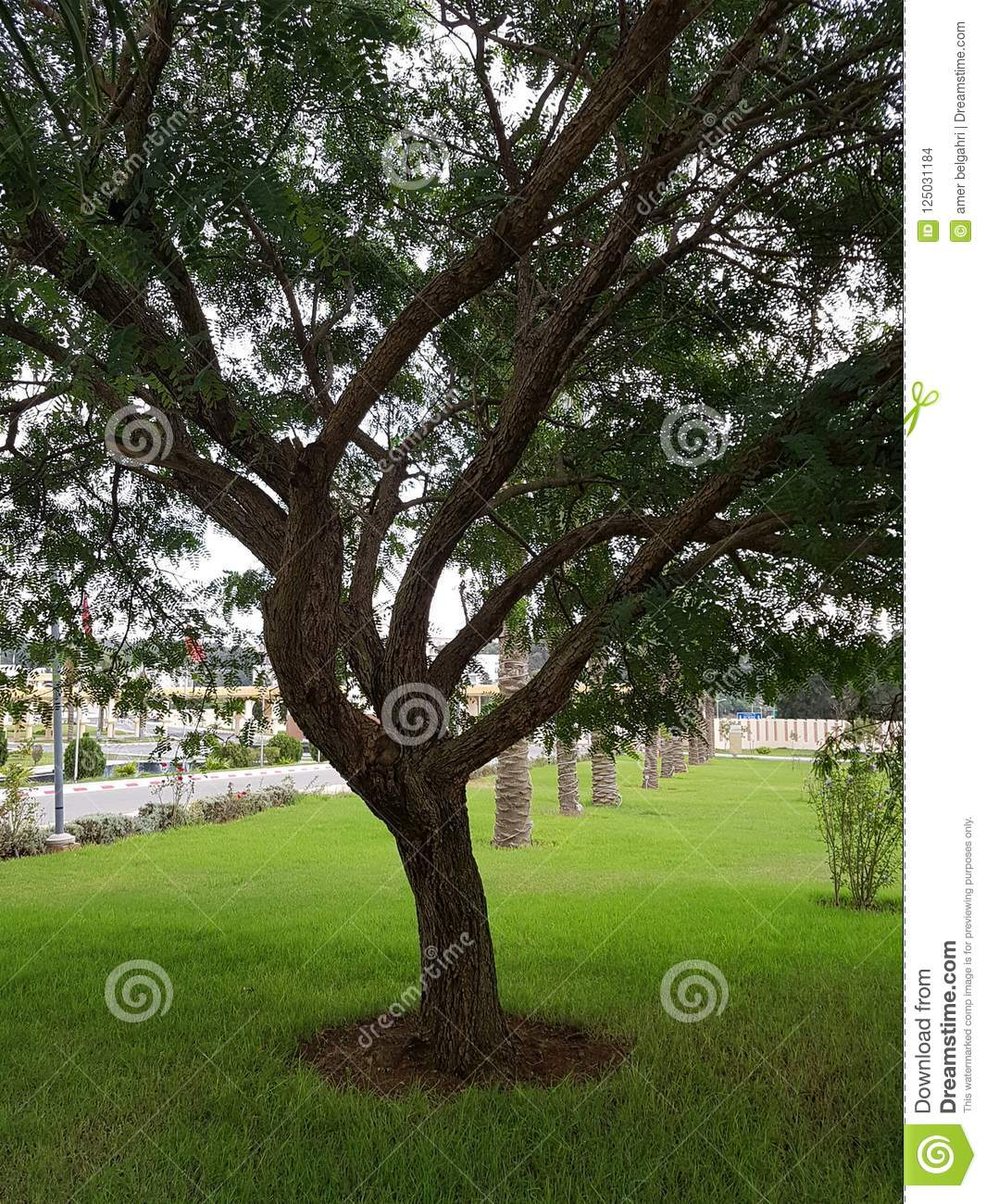 A beautiful park with wonderful greenery in Algiers