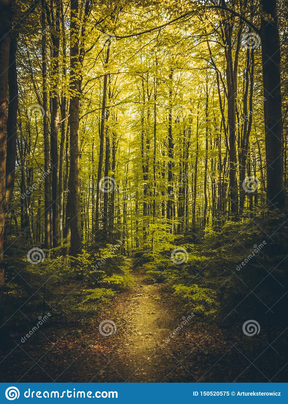 Beautiful path in summer forest