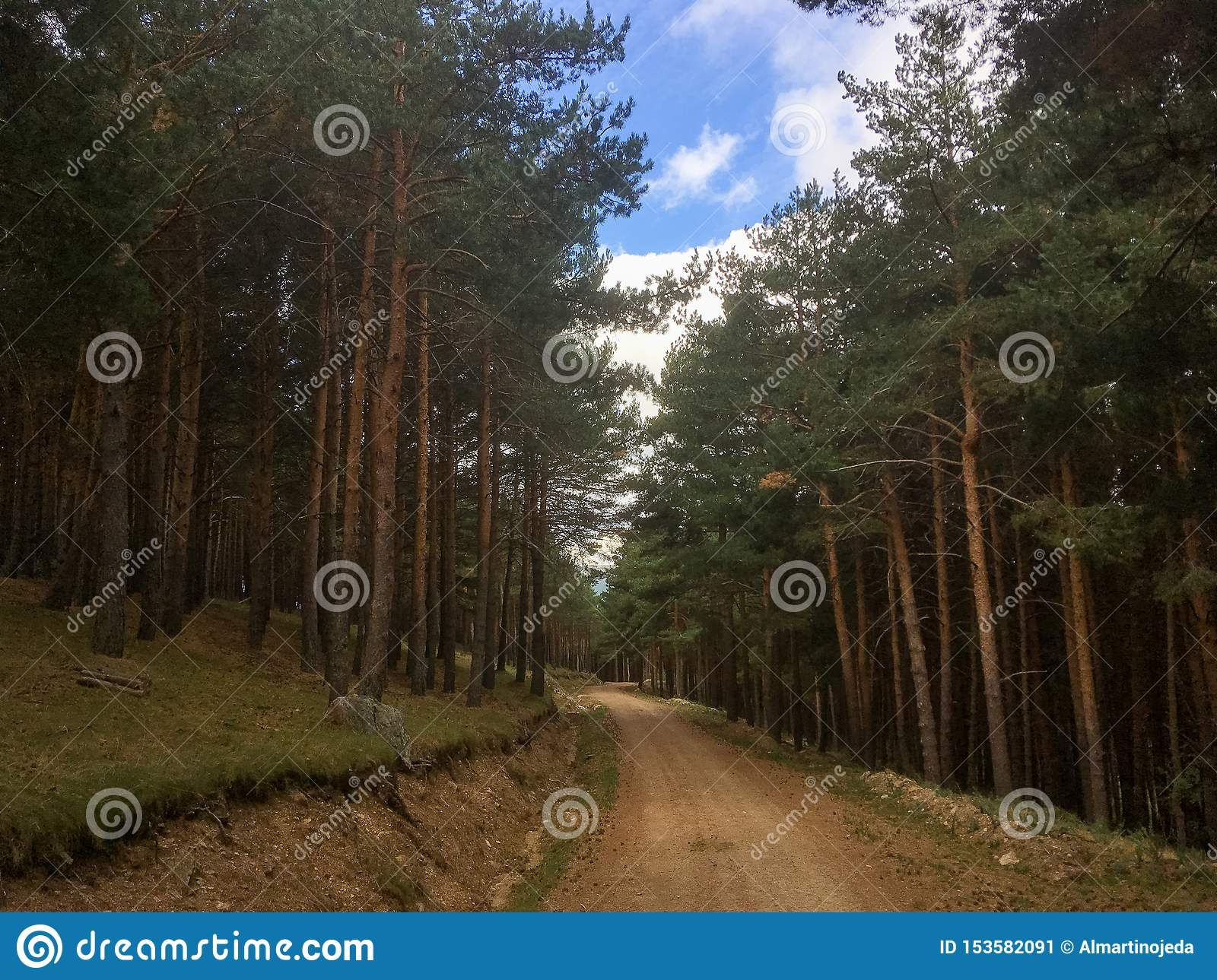 Path in a pine forest.