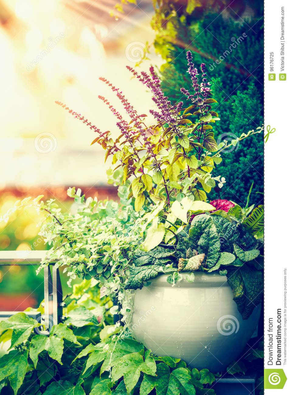 Download Beautiful Patio Flowers Pot On Balcony Or Terrace In Sunset Light.  Urban Container Gardening