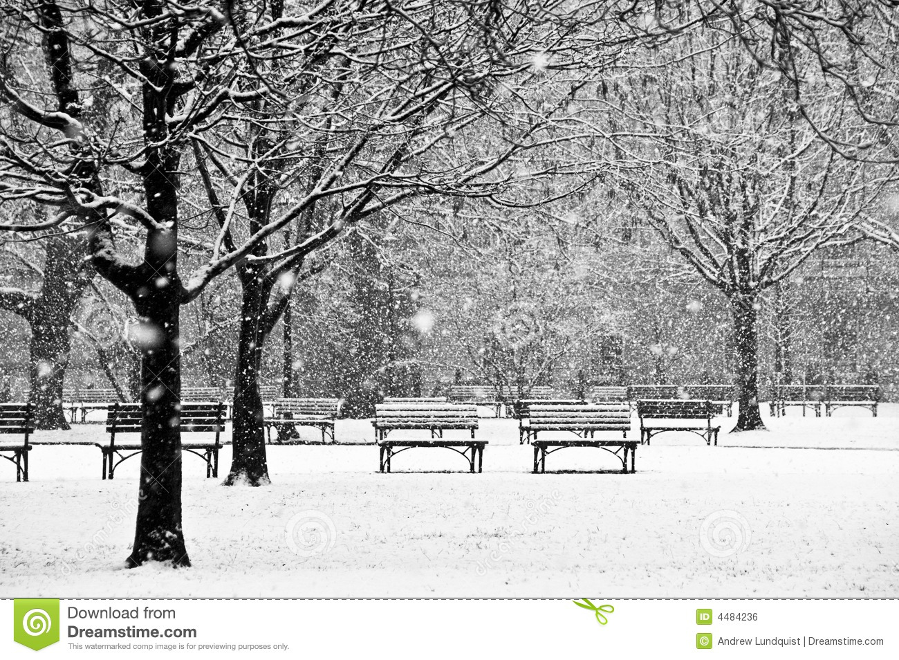 Beautiful, peaceful scene of a park during a winter