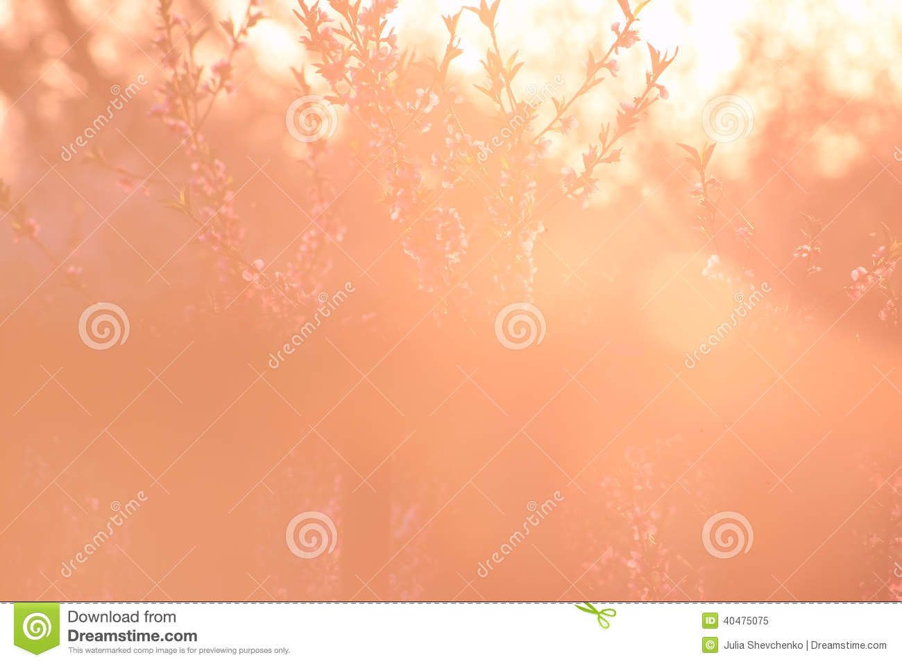 47 109 peach color photos free royalty free stock photos from dreamstime dreamstime com
