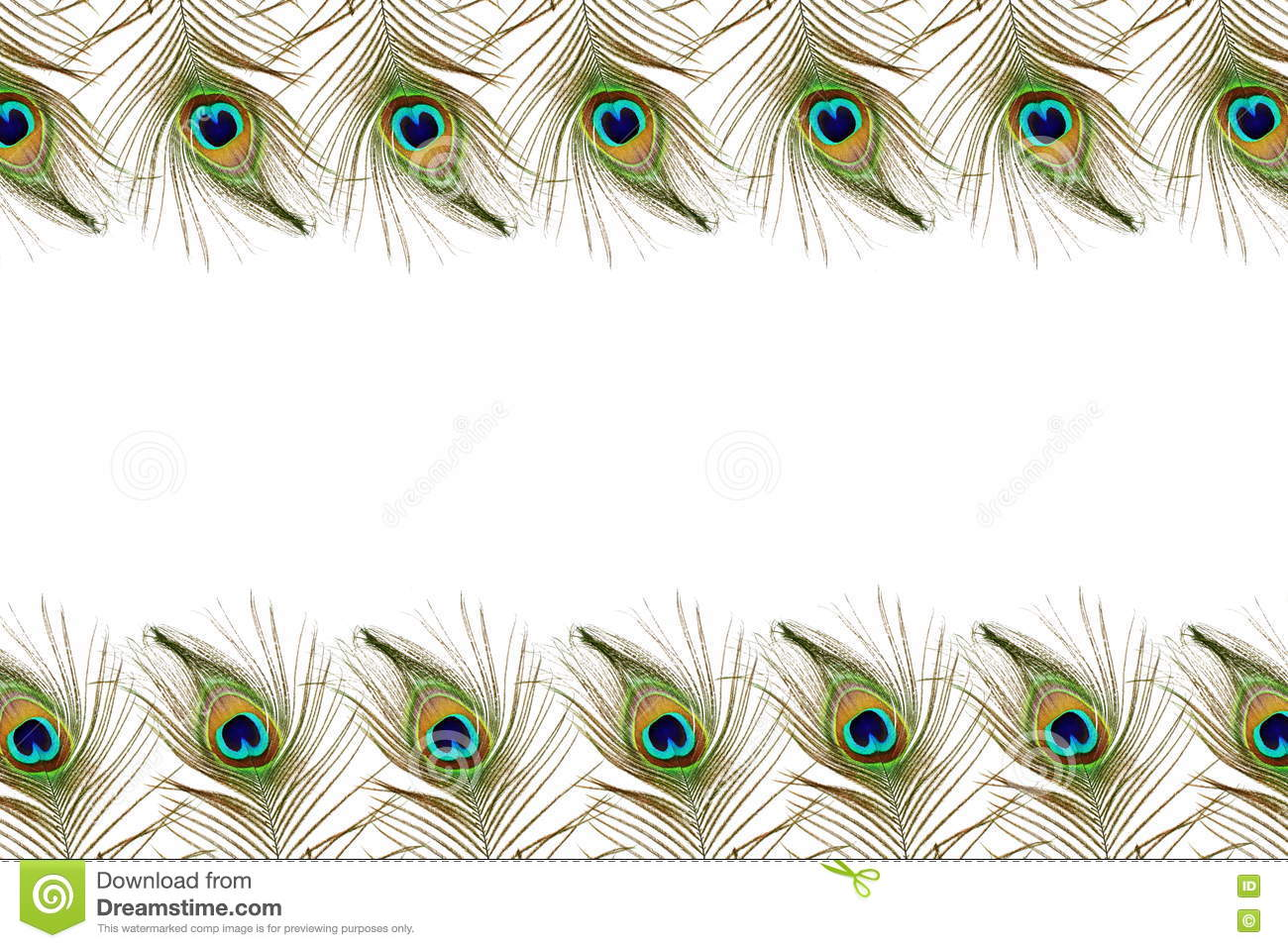 Beautiful peacock feathers as background with text copy space stock photo image 70622969 - Beautiful peacock feather ...