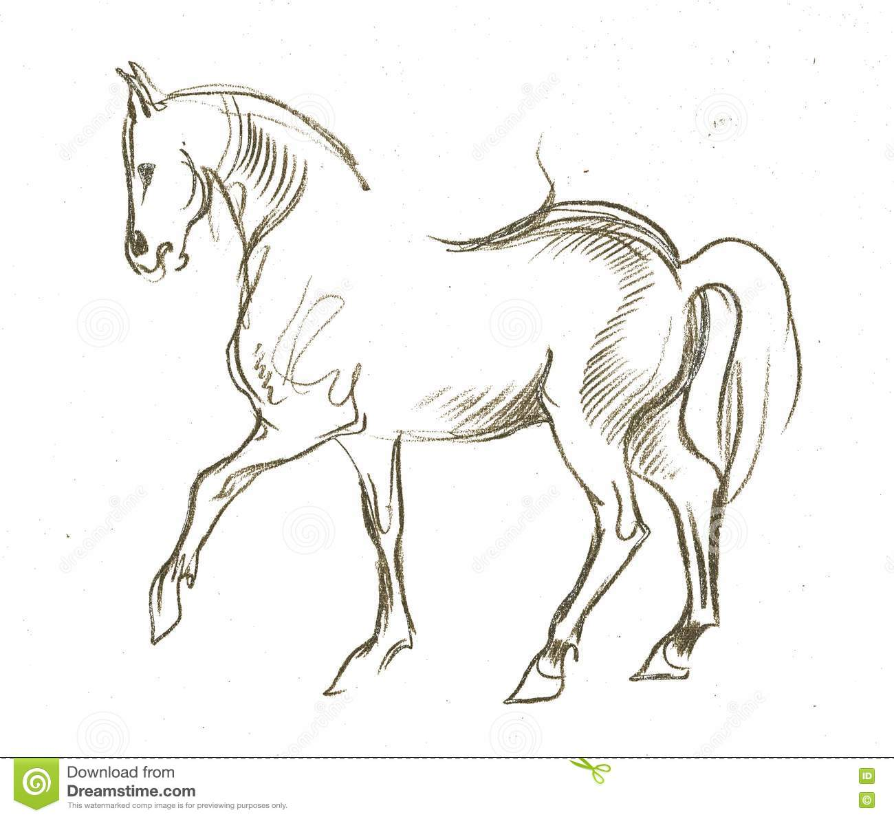 Beautiful Pencil Sketch The Horse Stock Illustration Illustration Of Walking Drawing 72319078