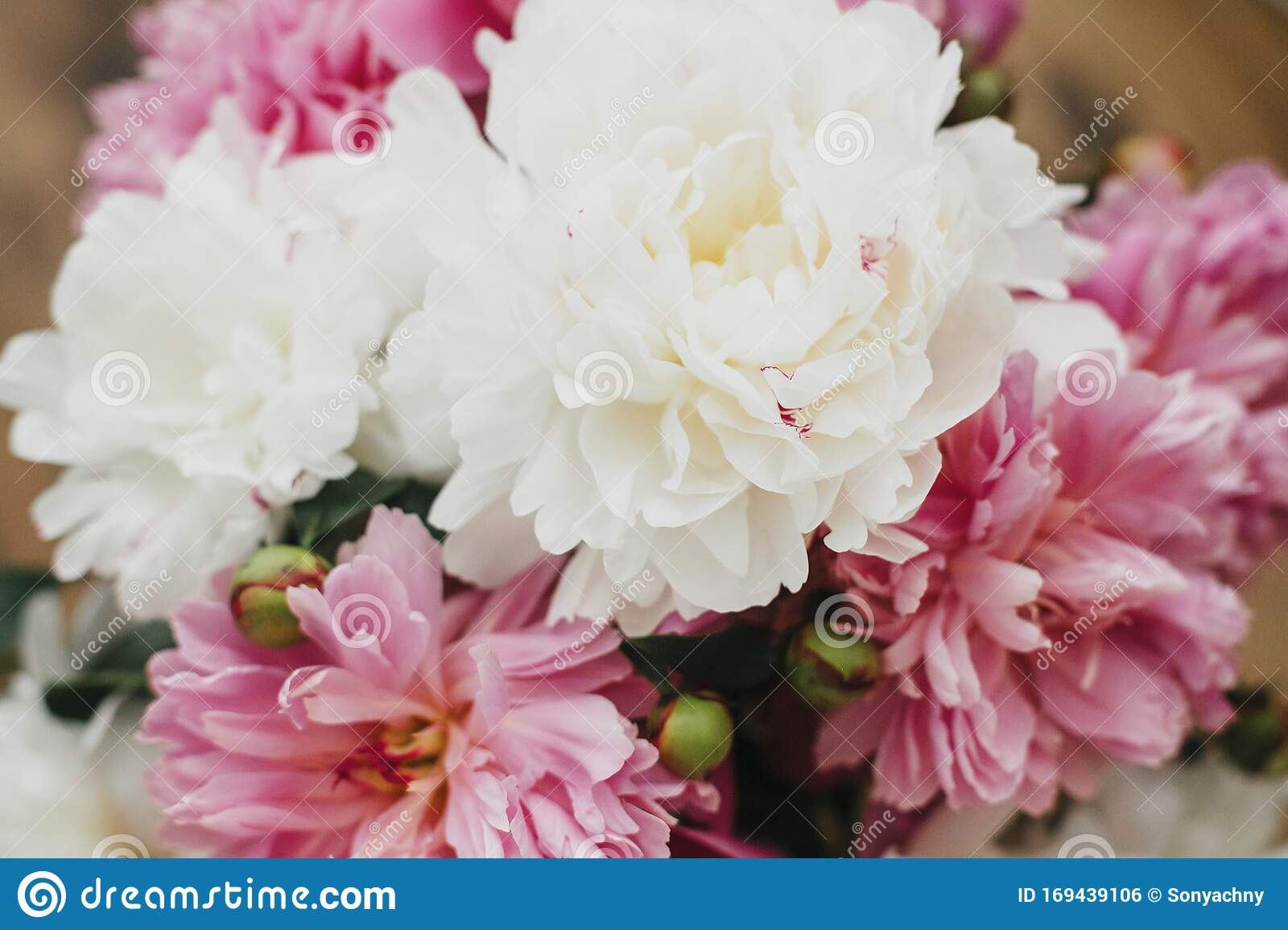 Beautiful Peony Bouquet In Sunny Light Stylish Pink And White Peonies On Wooden Background Hello Spring Happy Mothers Day Stock Photo Image Of Card Beauty 169439106