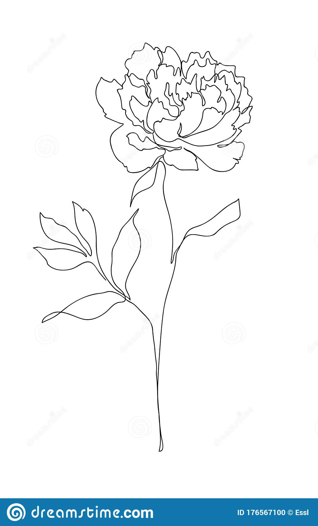 Beautiful Peony Flower Line Art Stock Vector Illustration Of Drawing Line 176567100