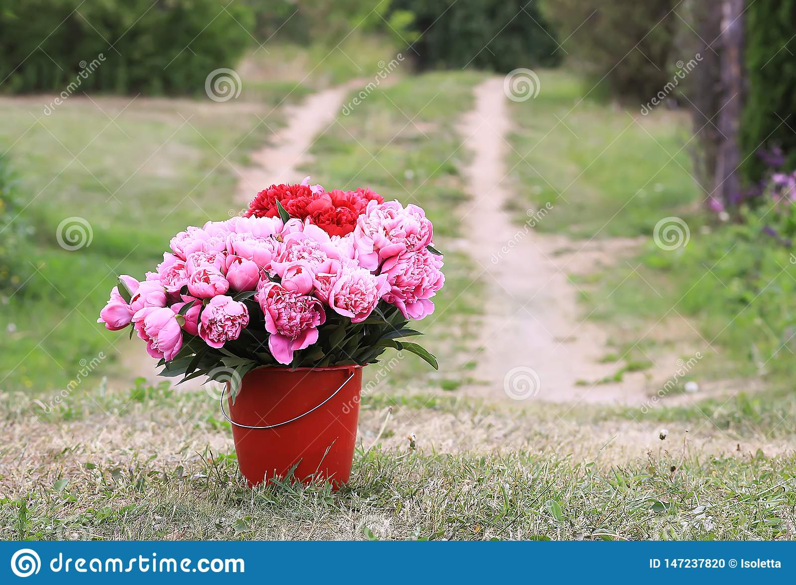 Beautiful Peony Flowers Bouquet In The Bucket On Rural ...