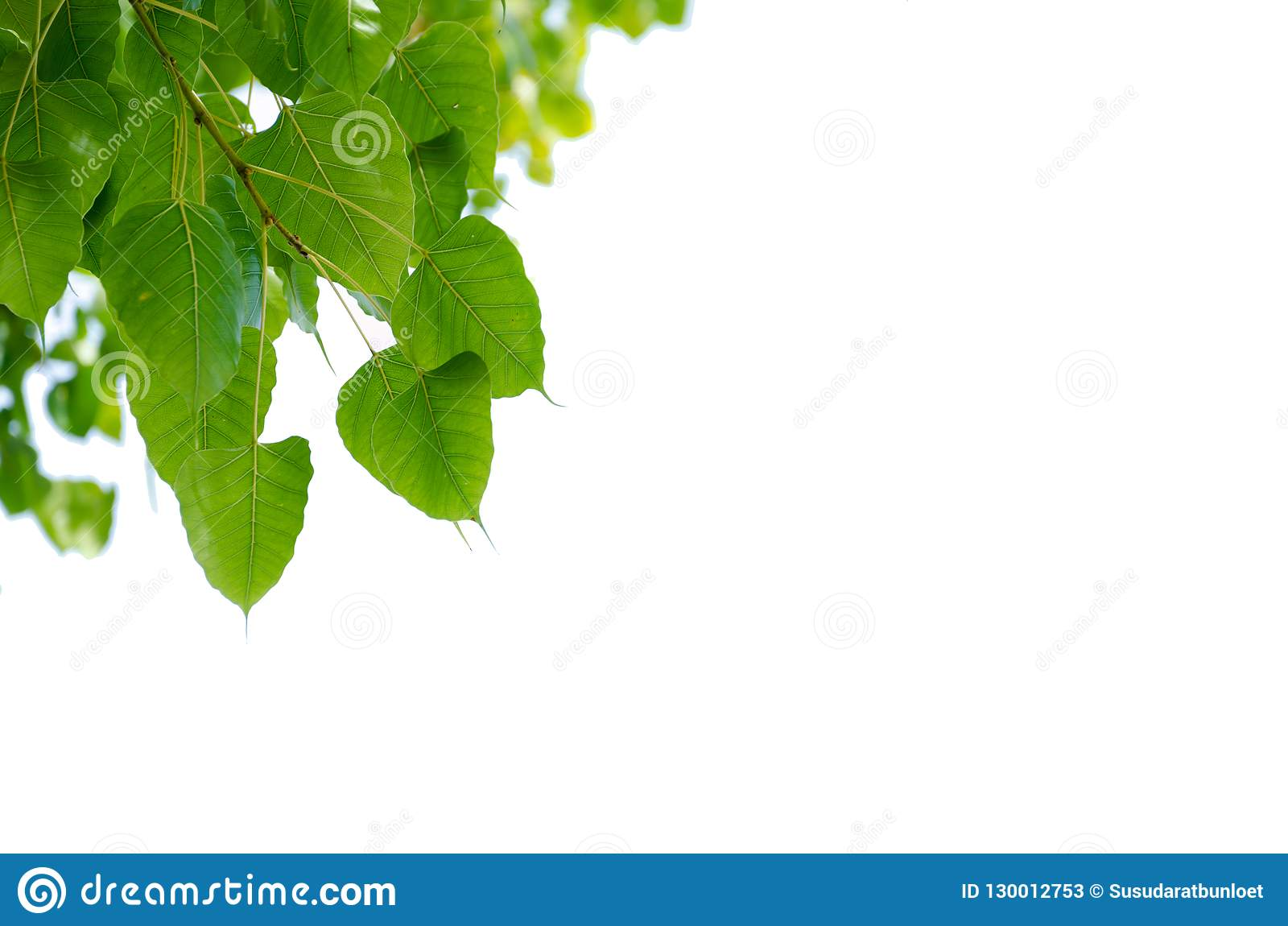 Beautiful picture frame made from green leaves on white background, picture frame Leaves