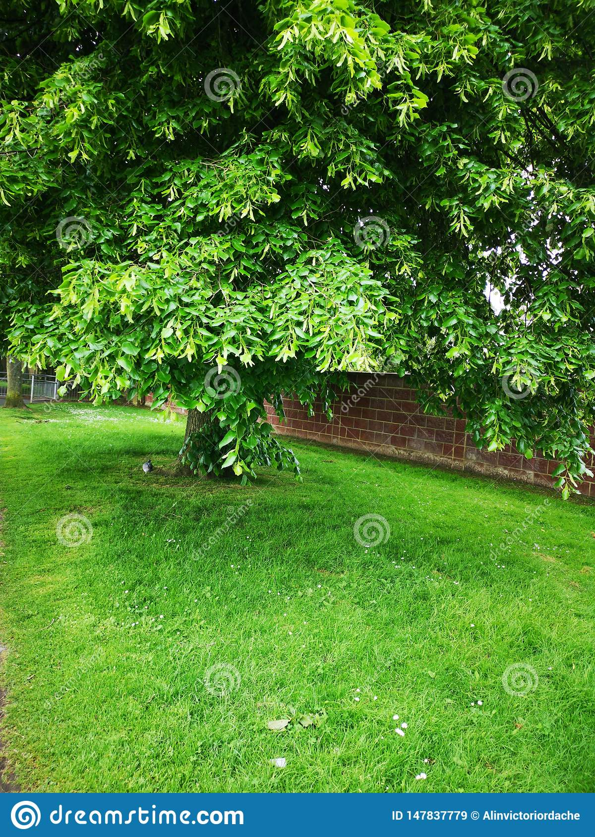 Beautiful green tree - spring picture