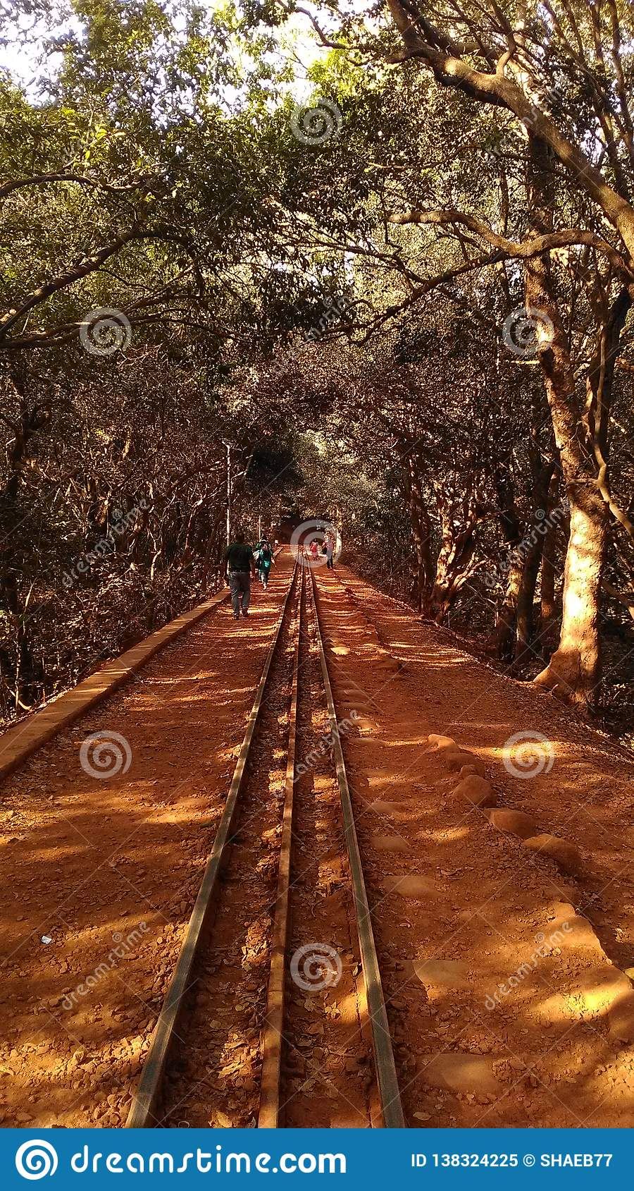 Railway track inside the forest