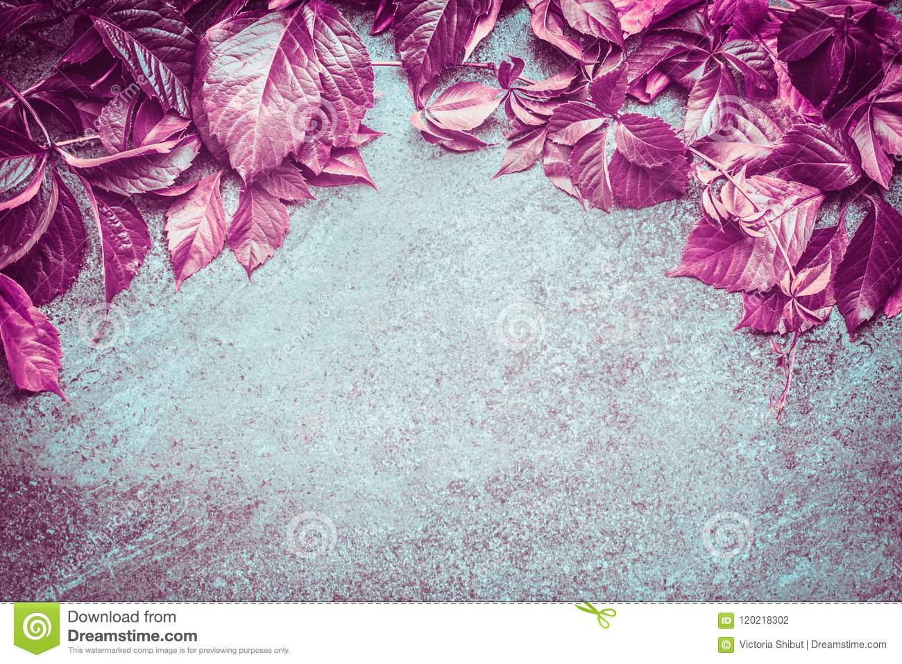 Beautiful pink autumn wild grapes leaves composing on dark vintage background, top view
