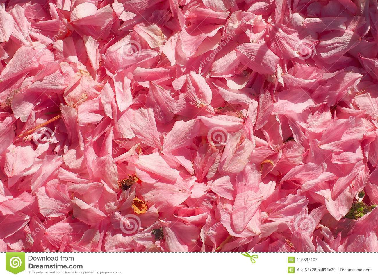 Beautiful Background Flowers Spring Tenderness Texture Stock Image
