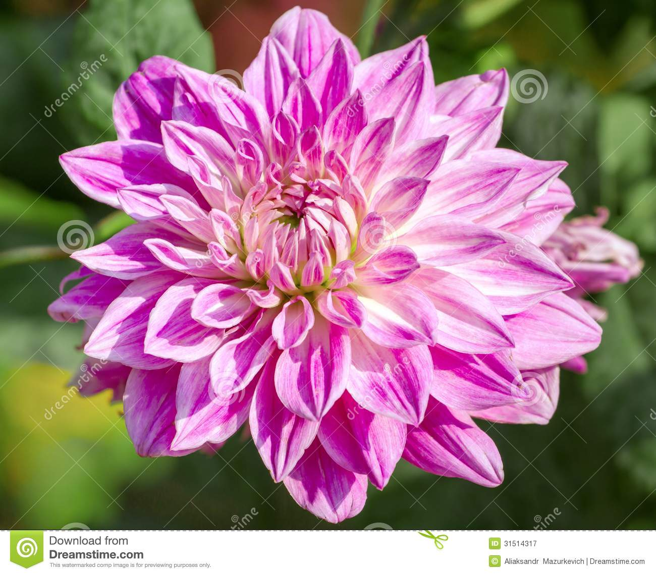 Flower Meanings by Type Name Color and Occasion  The