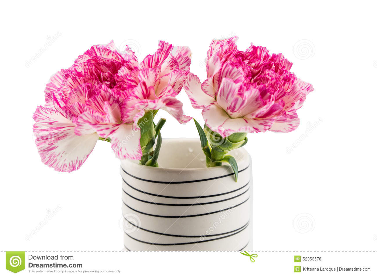 Beautiful Pink Flower In Blackwhite Vase On White Background Stock