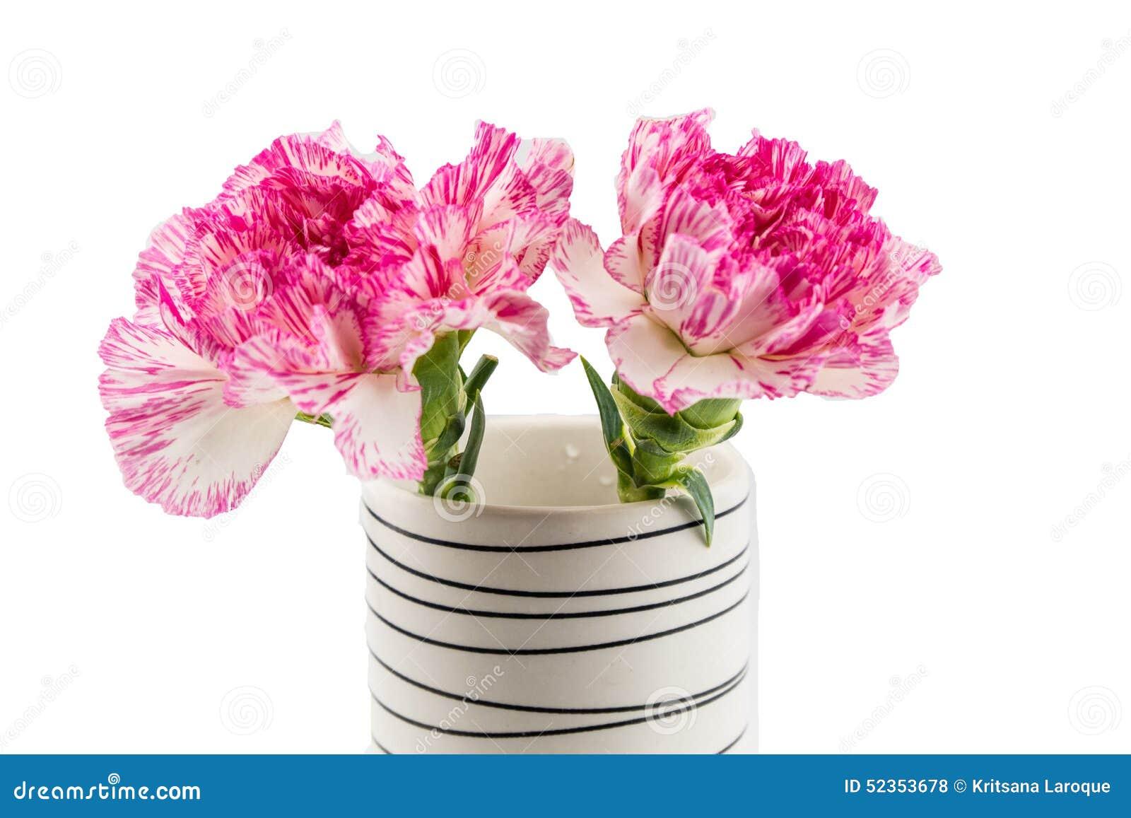 Beautiful pink flower in blackwhite vase on white background beautiful pink flower in blackwhite vase on white background reviewsmspy