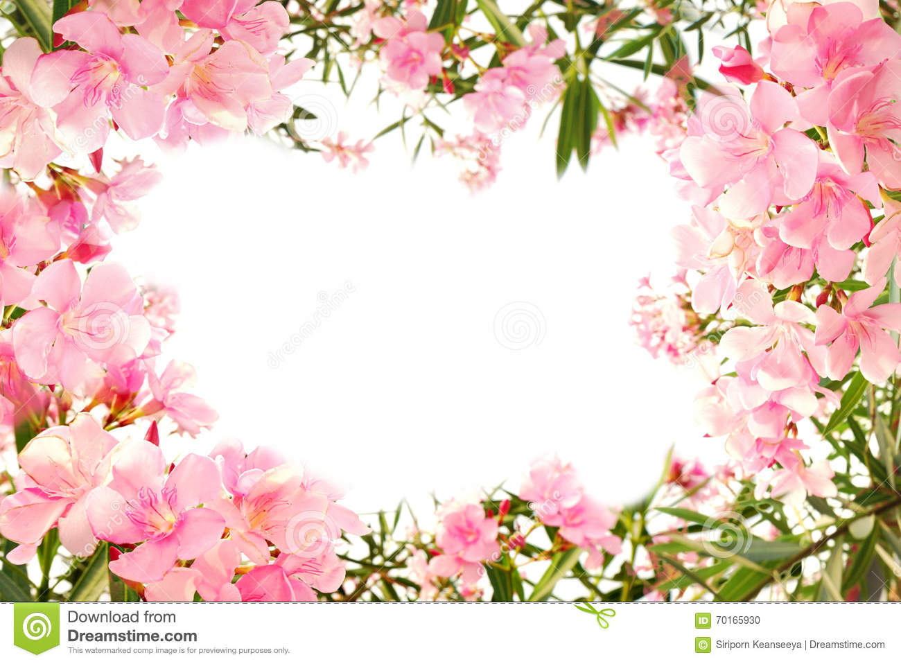 Pink Flower Borders Image Collections Flower Decoration Ideas