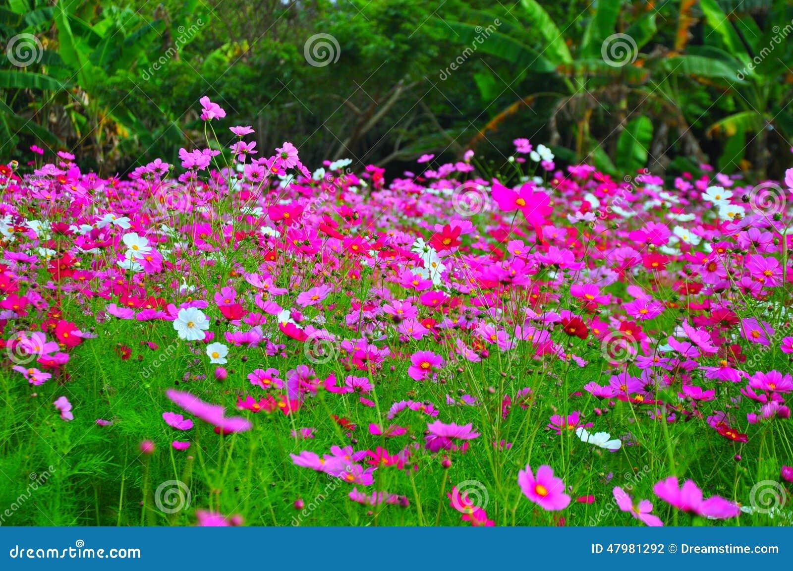 Beautiful Pink Flower Garden At Jim Thompsons Farm