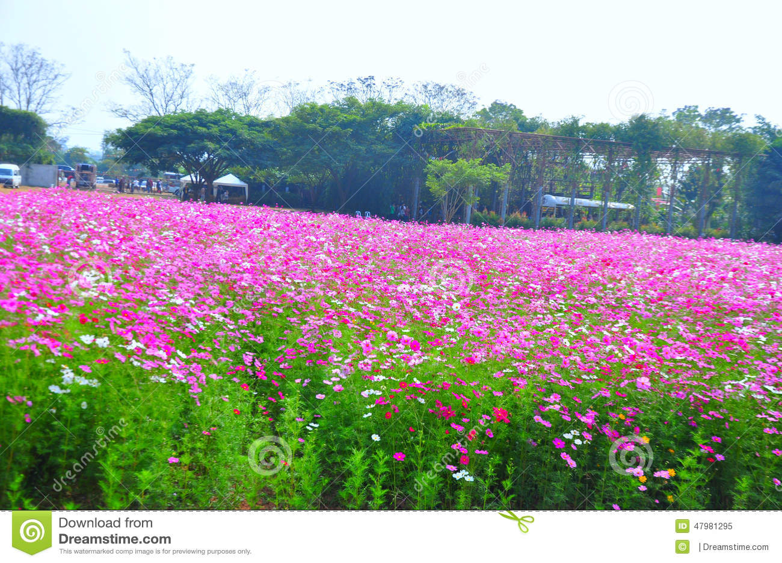 Beautiful Pink Flower Garden At Jim Thompson S Farm