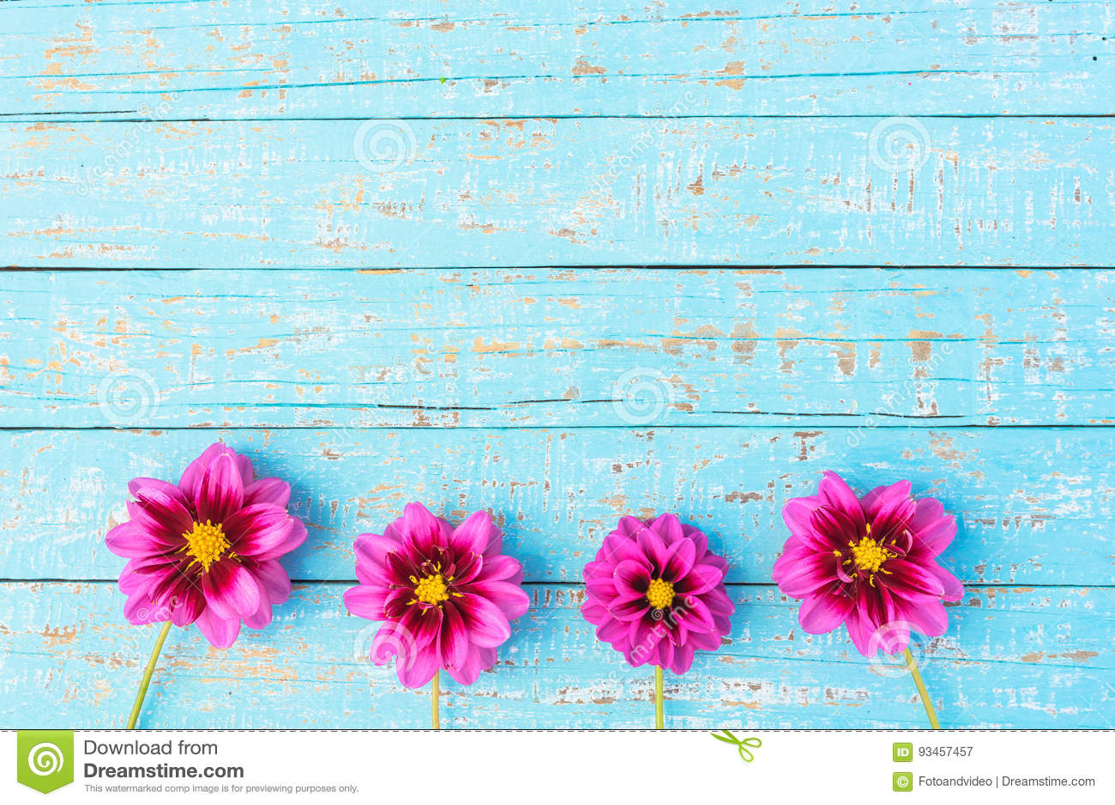 Beautiful Pink Flowers Border On Light Blue Background Stock Image