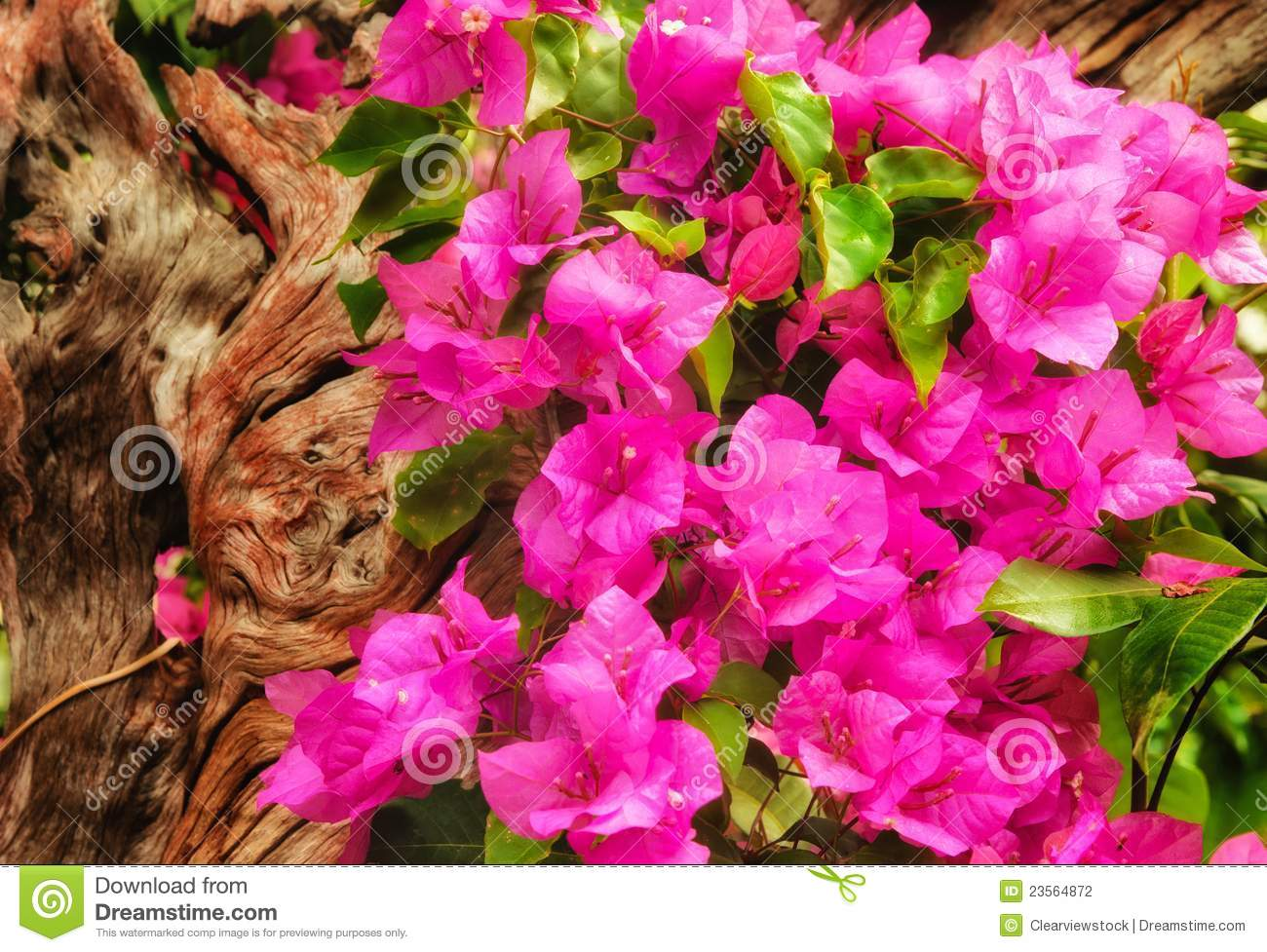 Beautiful Pink Flowers In The Garden Stock Photo Image Of Plant