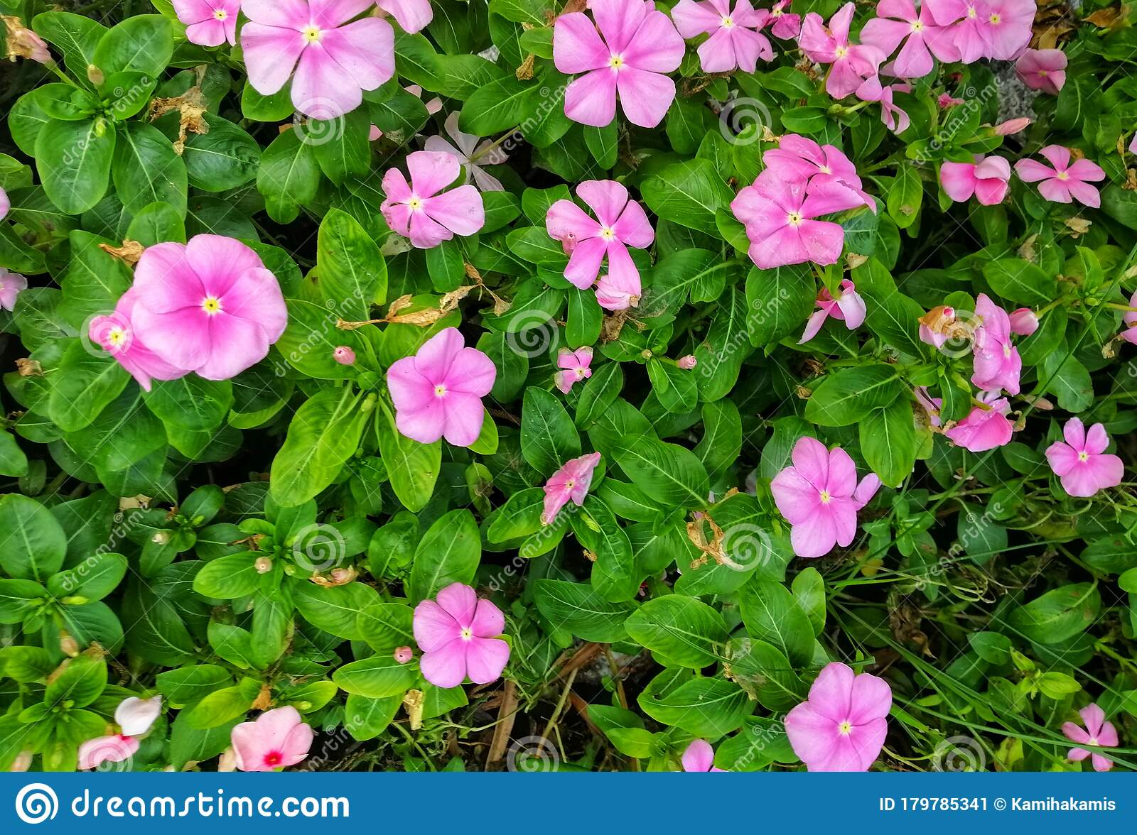 Beautiful Pink Flowers At The Garden. Floral Background ...