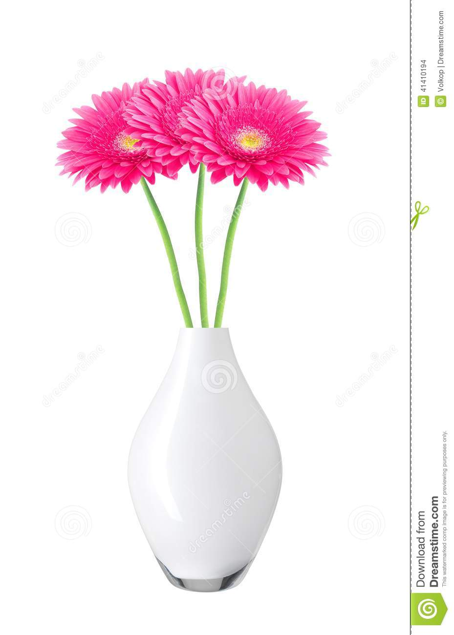 Beautiful Pink Gerbera Daisy Flowers In Vase Isolated On White Stock