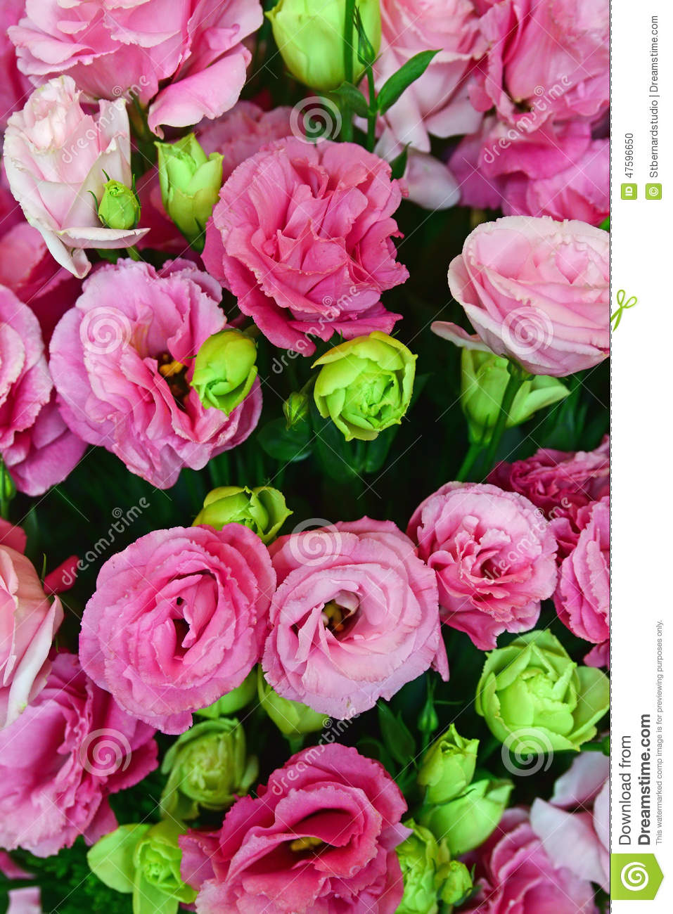 Green And Pink Roses Beautiful Pink ...