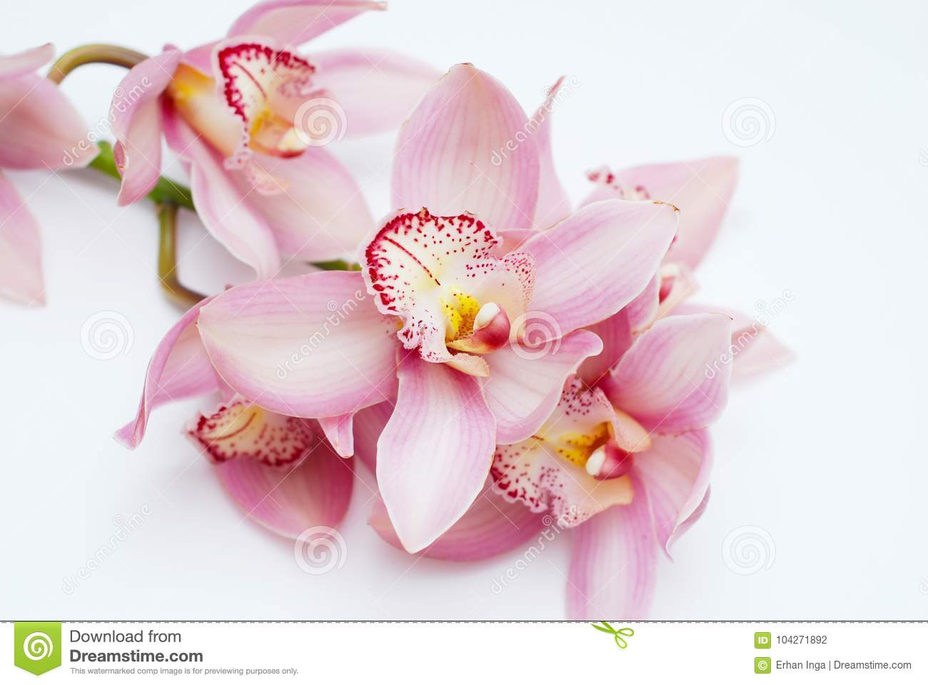 Beautiful Pink Orchid Flower On White Background Pink Flower Branch