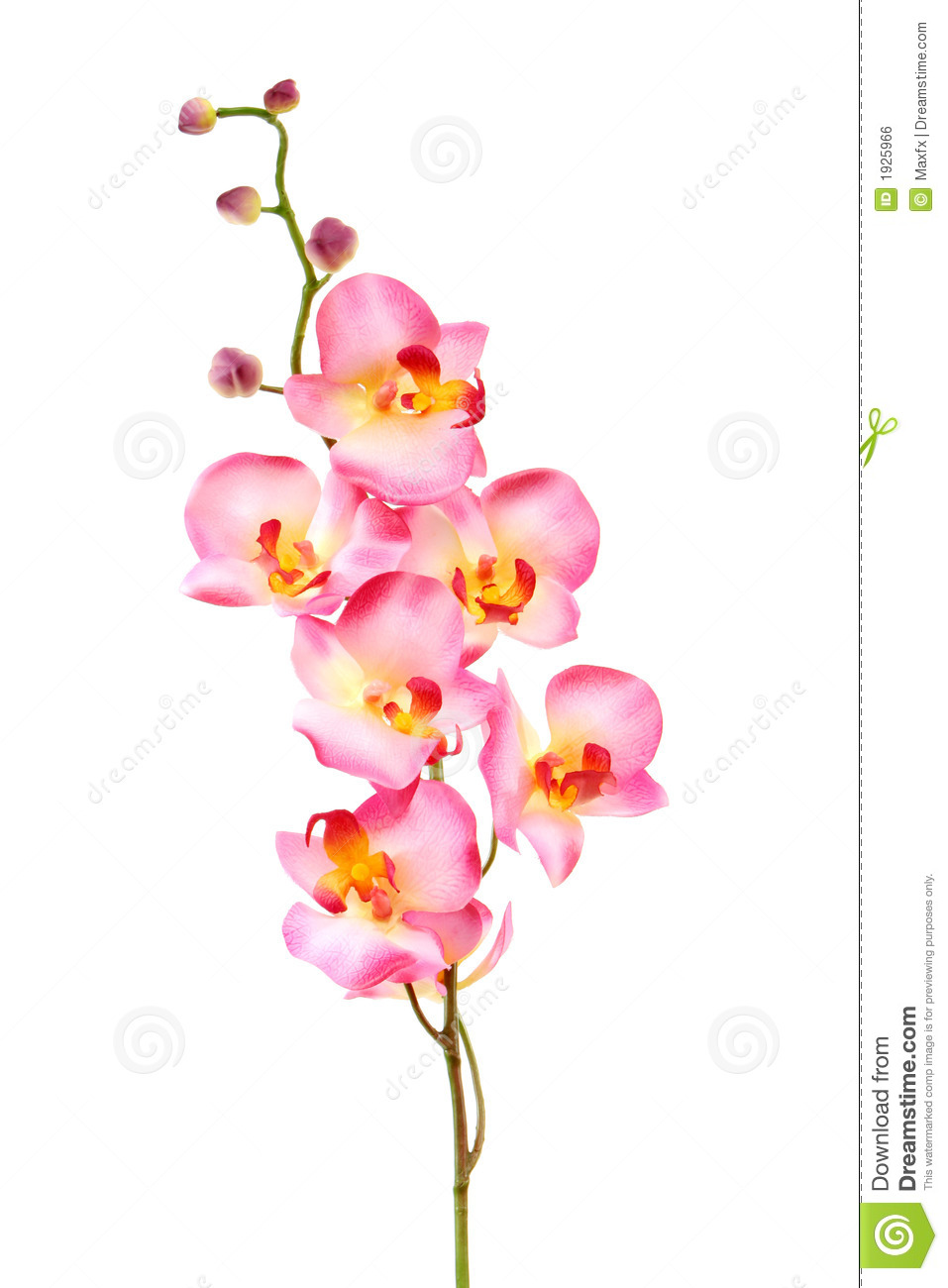 White Pink Orchid, White Orchid On Green, White Orchids Pink Lines ...