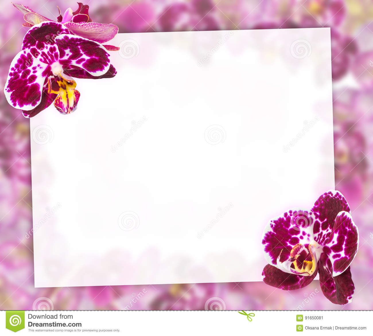 Beautiful pink orchids border for greeting card or lovely flower download beautiful pink orchids border for greeting card or lovely flower frame stock image image m4hsunfo