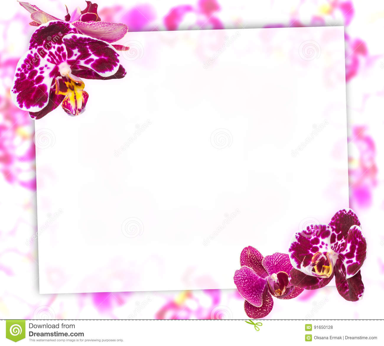 Beautiful pink orchids border for greeting card or lovely flower beautiful pink and violet orchids border for greeting card lovely flower frame with blank space for text m4hsunfo