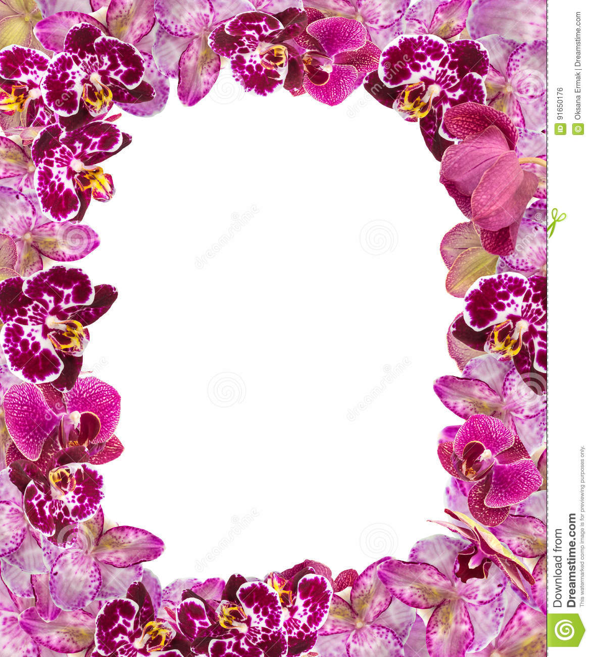 beautiful pink orchids border for greeting card or lovely flower frame stock photo image 91650176. Black Bedroom Furniture Sets. Home Design Ideas