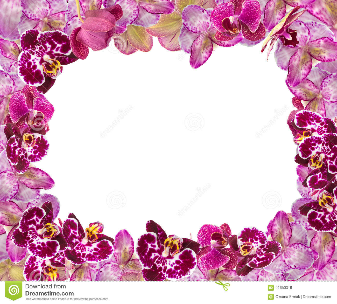 beautiful pink orchids border for greeting card or lovely