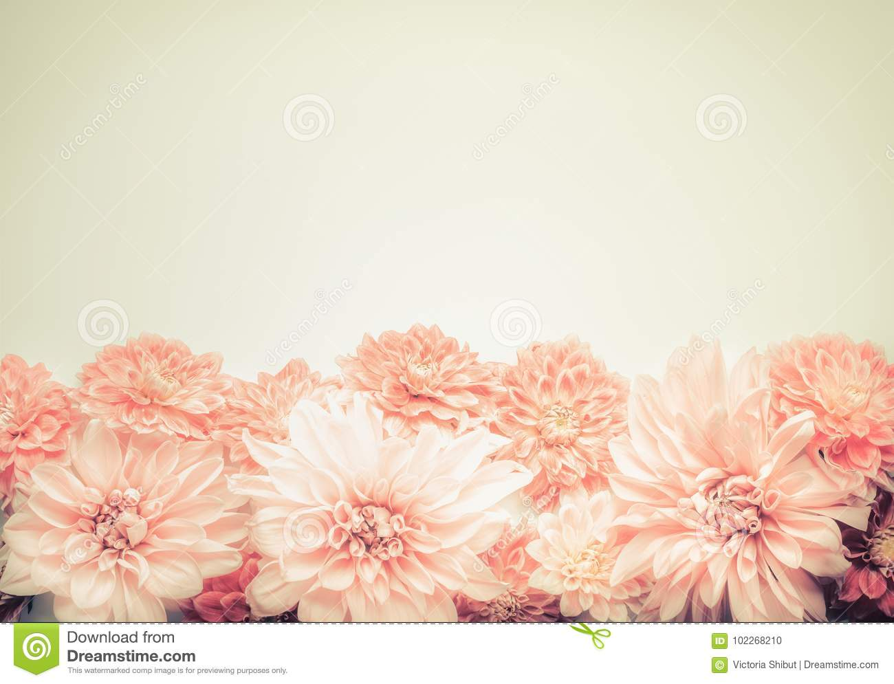 Beautiful Pink Pastel Flowers On Beige Background Top Border