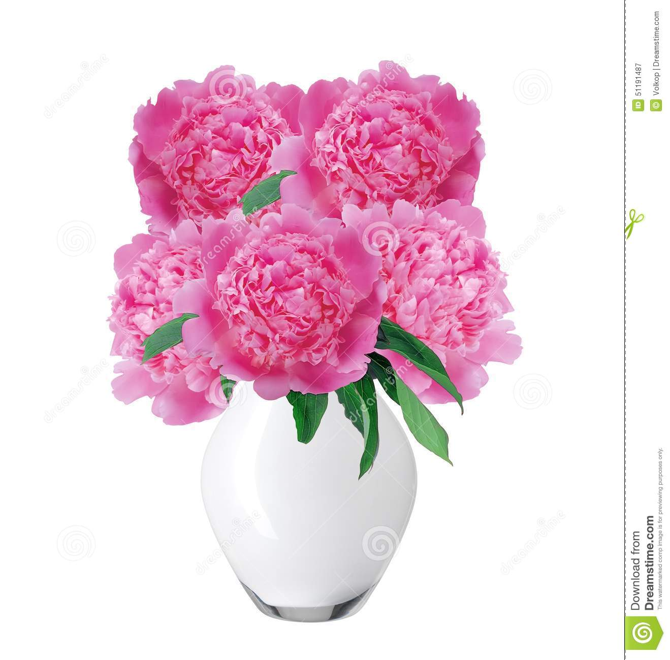 Beautiful Pink Peonies In Glass Vase With Bow Isolated On