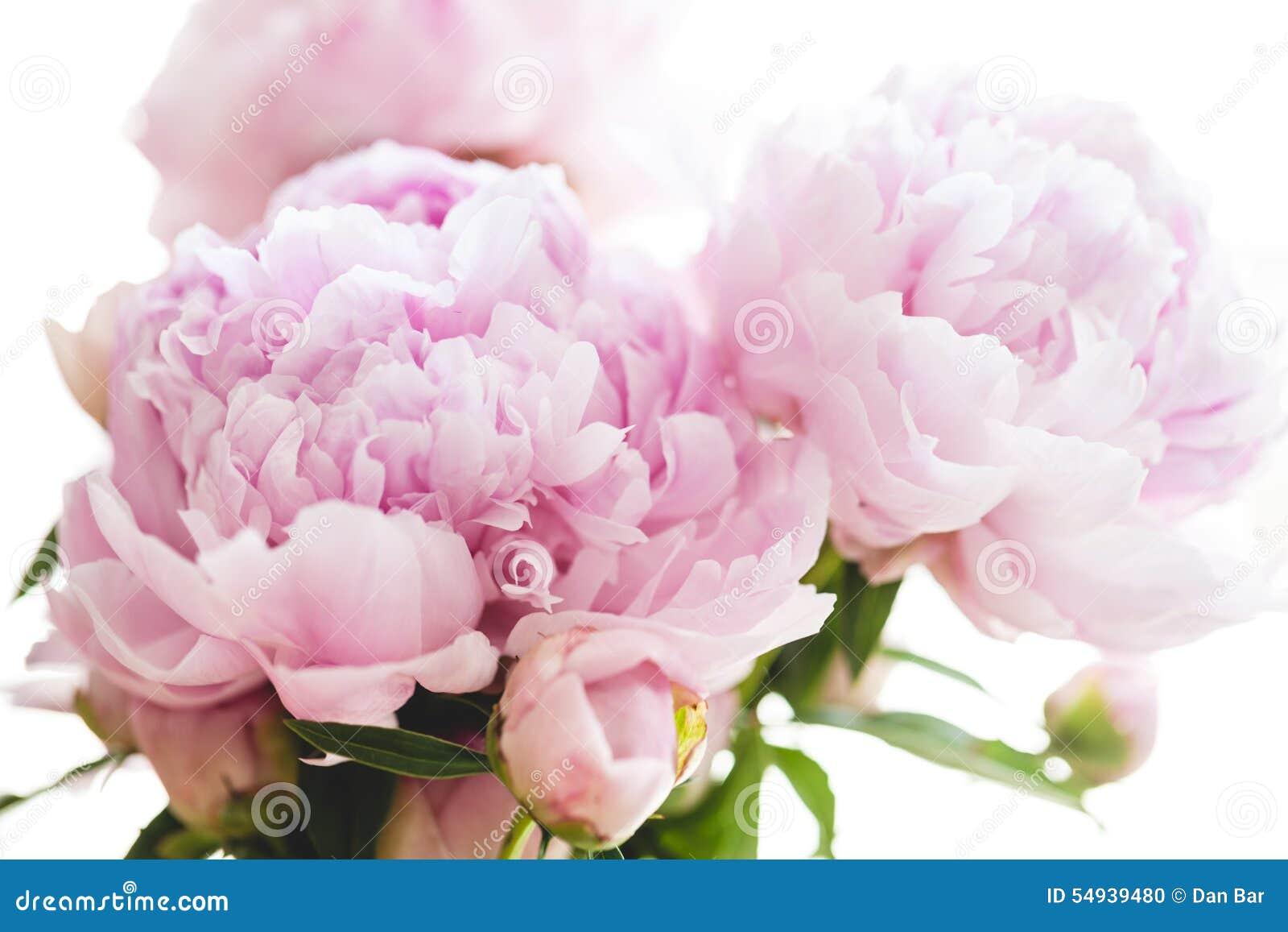 Beautiful pink peony flowers stock photo image 54939480 background beautiful flowers peony pink dhlflorist Images